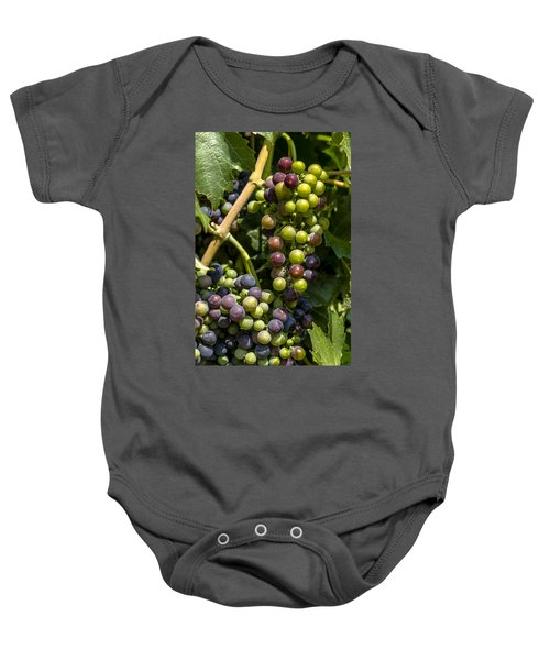 Red Wine Grape Colors In The Sun Baby Onesie