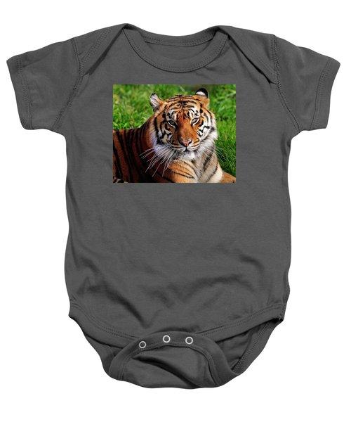 Sumatran Tiger  Baby Onesie