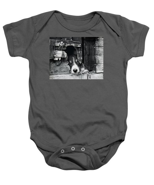 Working Border Collie Dog. Baby Onesie