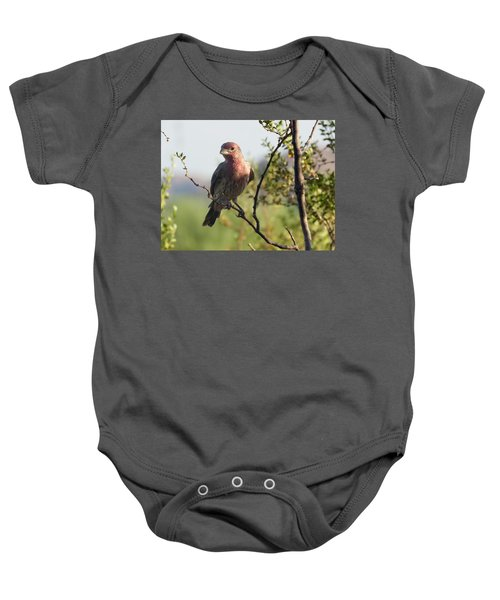 Young Male House Finch Baby Onesie