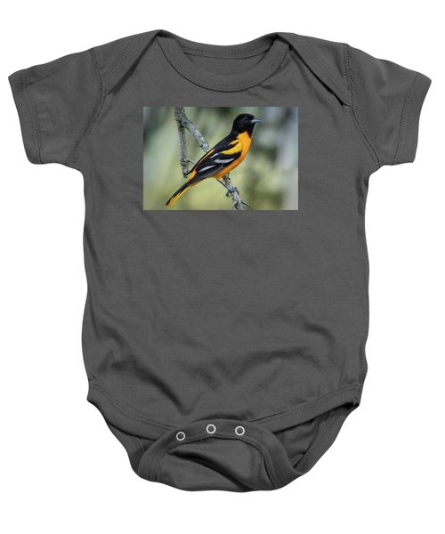 Baltimore Oriole Baby Onesie