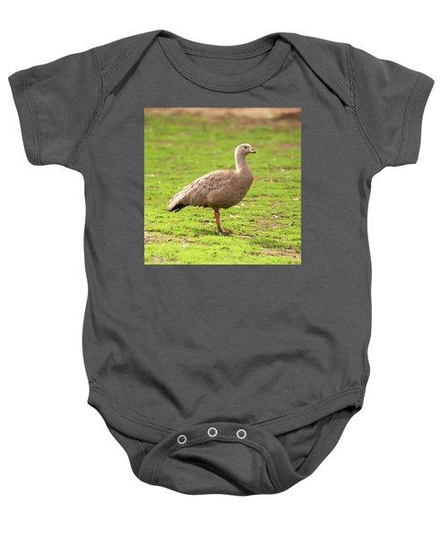 Cape Barron Goose Baby Onesie
