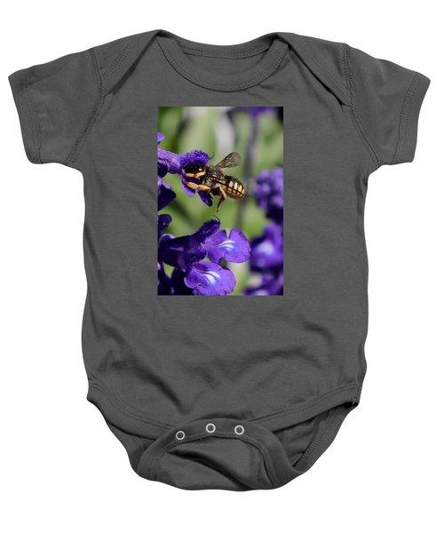 Carder Bee On Salvia Baby Onesie