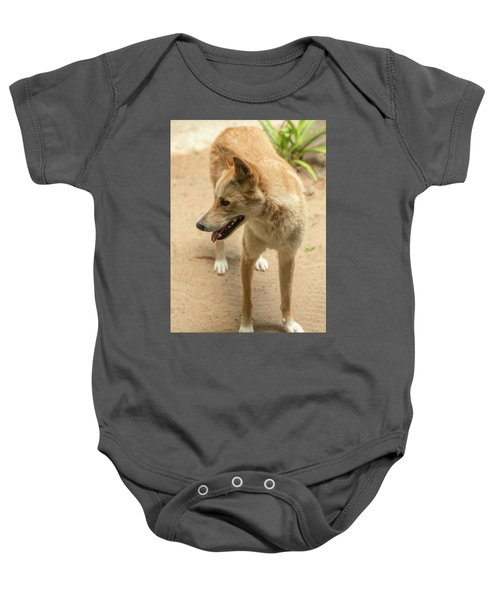 Large Australian Dingo Outside Baby Onesie