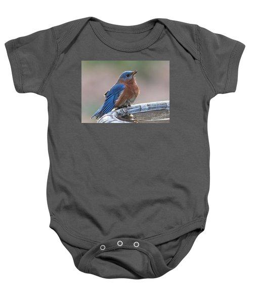 Male Eastern Blue Bird Baby Onesie