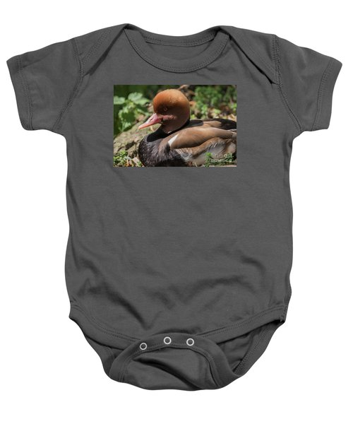 Red-crested Pochard Baby Onesie