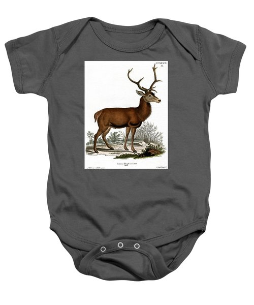 Red Deer Circa 19th Century Colored Engraving Baby Onesie