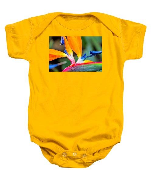 Bird Of Paradise After The Rain Baby Onesie