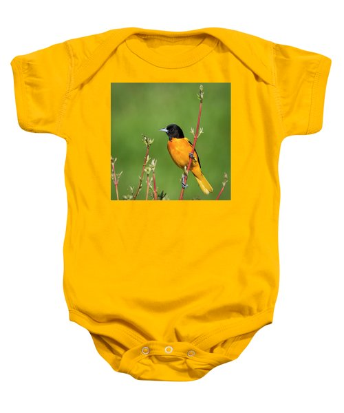 Male Baltimore Oriole Posing Baby Onesie