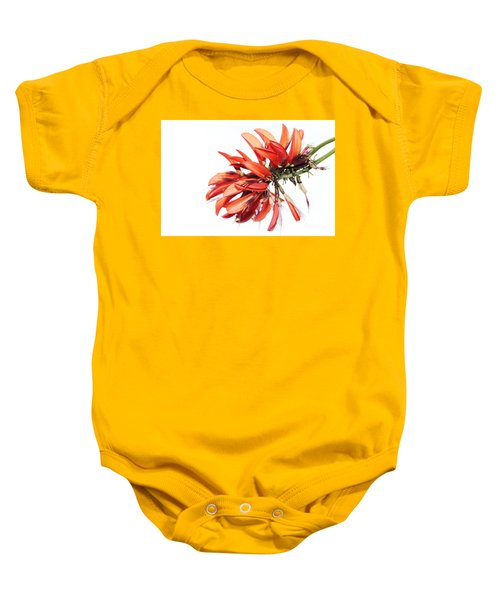 Baby Onesie featuring the photograph Orange Clover I by Stephen Mitchell