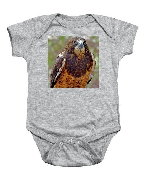 Swainson's Hawk Baby Onesie