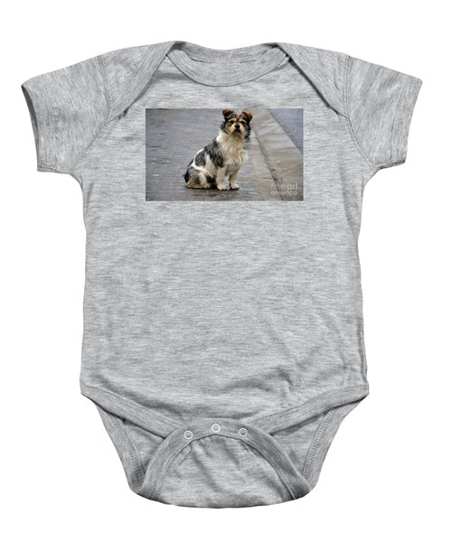Cute Dog Sits On Pavement And Stares At Camera Baby Onesie