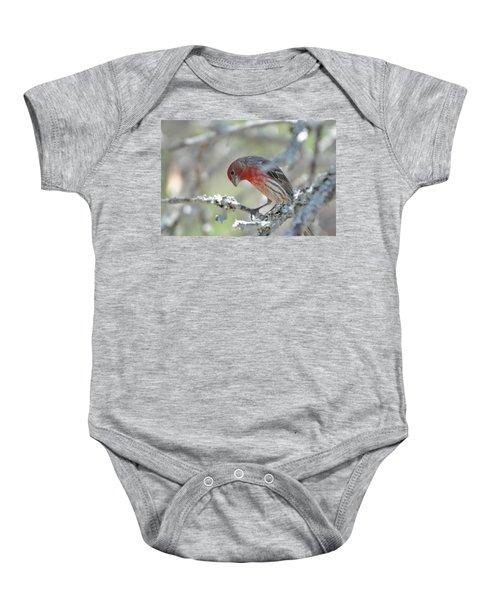 House Finch Baby Onesie