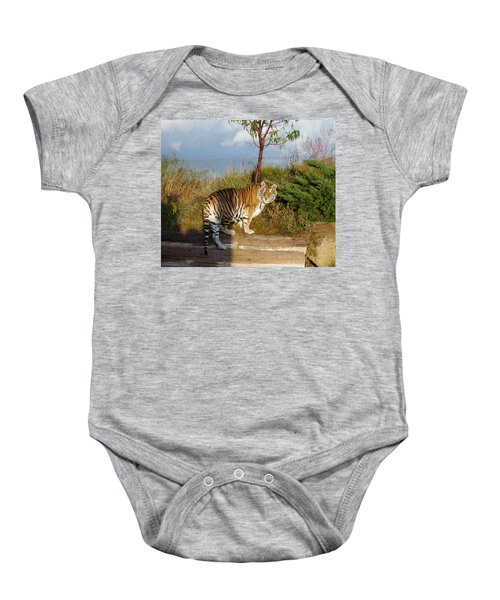 Out Of Africa  Tiger 1 Baby Onesie