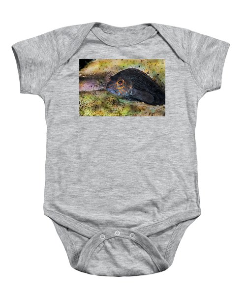 Seabass In A Shell Baby Onesie