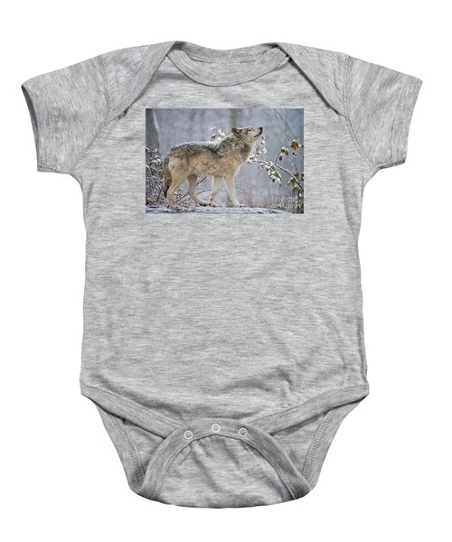 Timber Wolf Pictures 188 Baby Onesie