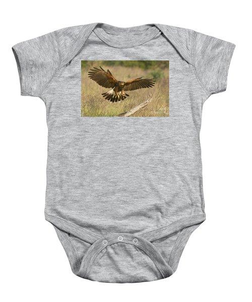 Wild Harris Hawk Landing Baby Onesie