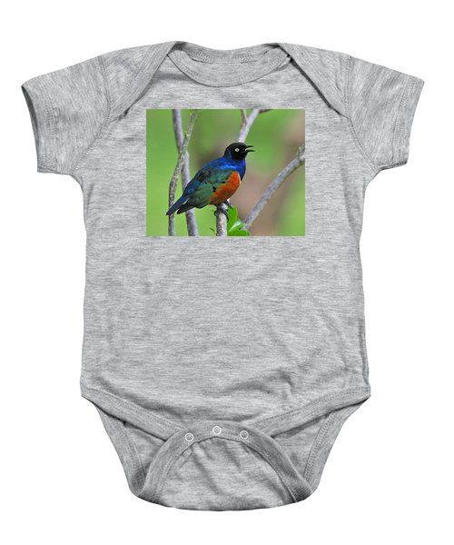 Superb Starling Baby Onesie by Tony Beck