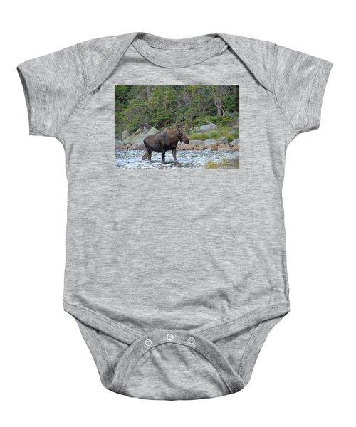 Young Bull Moose Baby Onesie