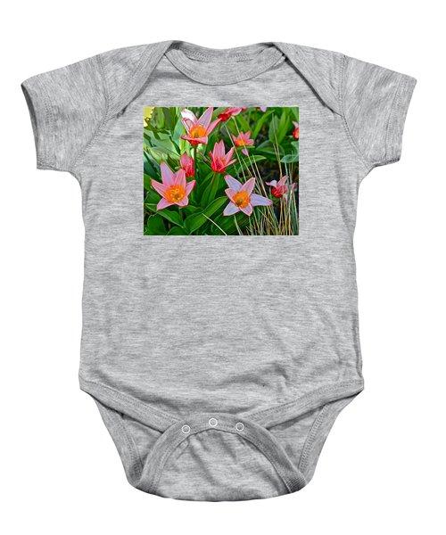 2016 Acewood Tulips 2 Baby Onesie