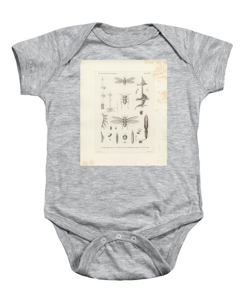 African Termites And Their Anatomy Baby Onesie