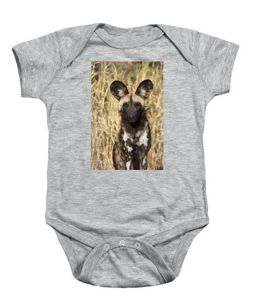 African Wild Dog Okavango Delta Botswana Baby Onesie