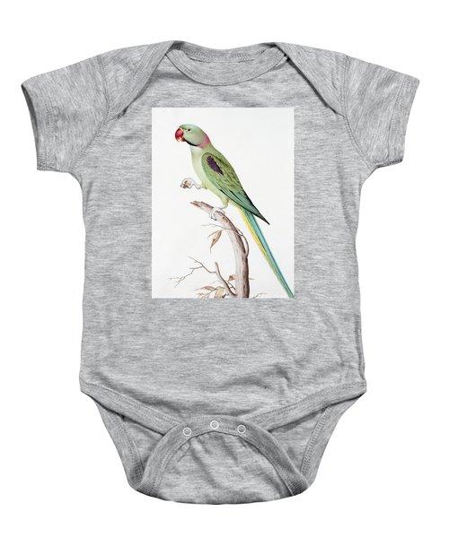 Alexandrine Parakeet Baby Onesie by Nicolas Robert