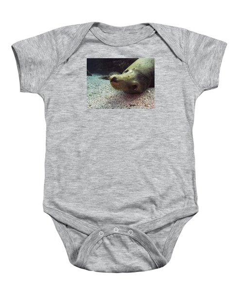 Am I Cute? Asks The Sea Lion Baby Onesie