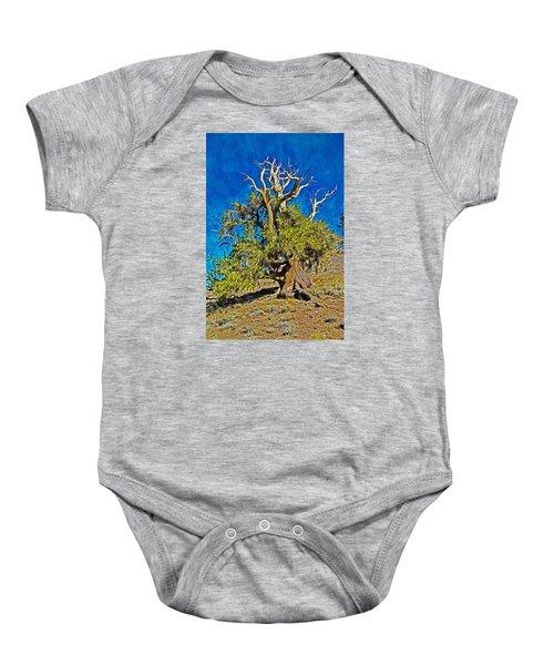Ancient Bristlecone Pine Baby Onesie