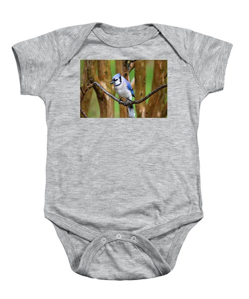 Blue Jay On A Branch Baby Onesie