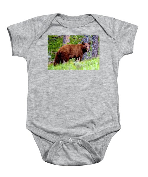Brown Bear Baby Onesie
