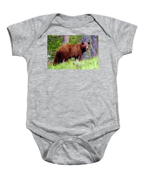 Brown Bear Baby Onesie