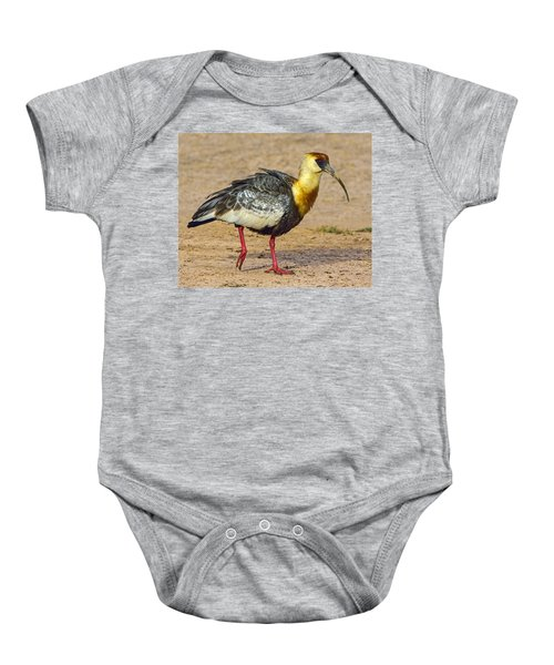 Buff-necked Ibis Baby Onesie by Tony Beck