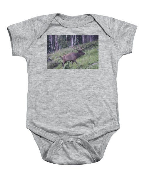 Bull Elk Rocky Mountain Np Co Baby Onesie