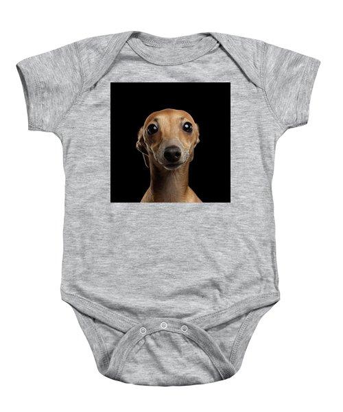 Closeup Portrait Italian Greyhound Dog Looking In Camera Isolated Black Baby Onesie