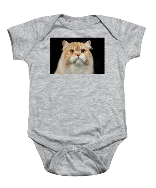 Closeup Portrait Of Red Big Persian Cat Angry Looking On Black Baby Onesie