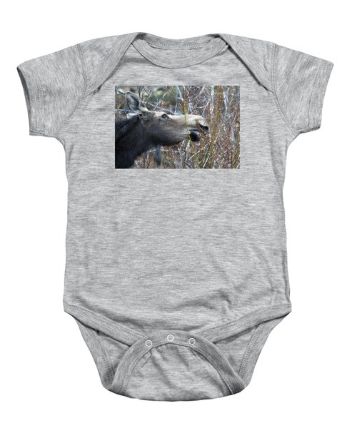 Cow Moose Dining On Willow Baby Onesie