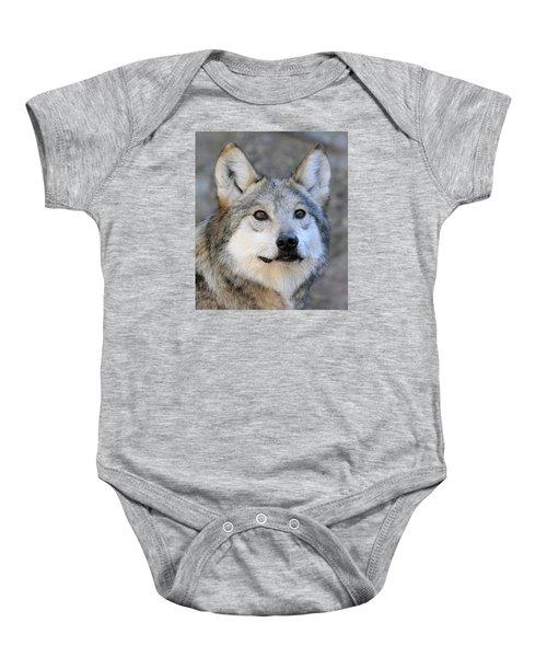 Curious Wolf Baby Onesie