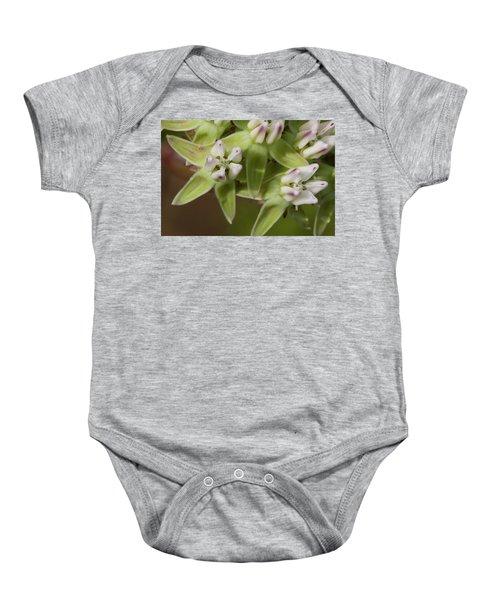 Curtiss' Milkweed #4 Baby Onesie