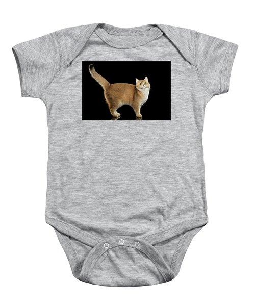 Funny British Cat Golden Color Of Fur Baby Onesie