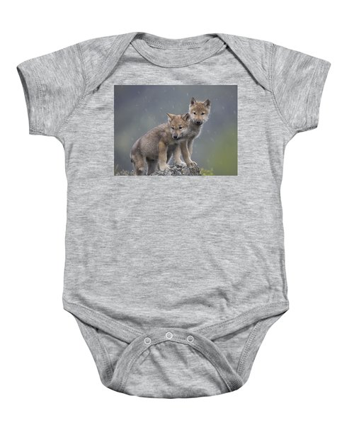 Gray Wolf Canis Lupus Pups In Light Baby Onesie