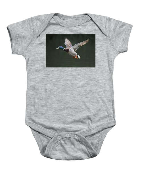 Mallard Drake In Flight Baby Onesie