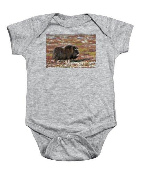 Muskox Baby Onesie