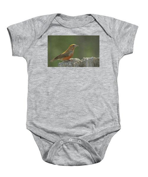 Red Crossbill Baby Onesie by Constance Puttkemery