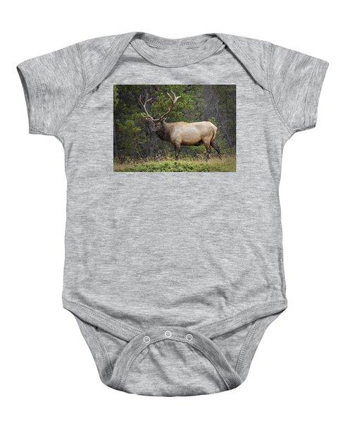 Rocky Mountain National Park Bull Elk Baby Onesie