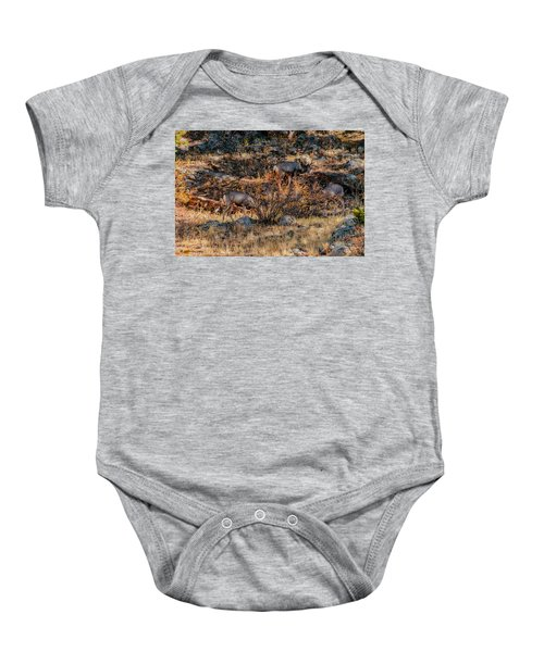 Rocky Mountain National Park Deer Colorado Baby Onesie