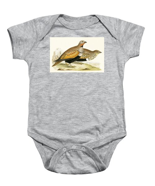 Sand Grouse Baby Onesie by English School