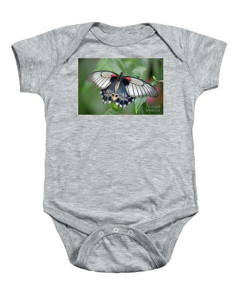 Tropical Butterfly Baby Onesie
