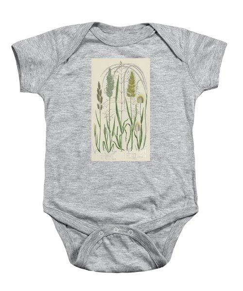 Vintage Botanical Print Of Grass Varieties Baby Onesie