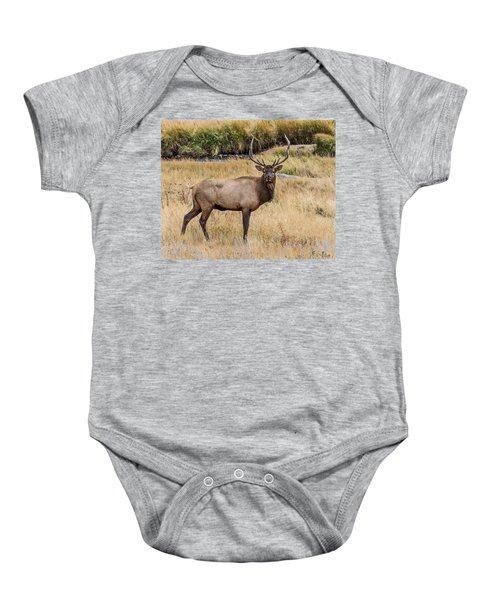 Young Bull Elk Baby Onesie